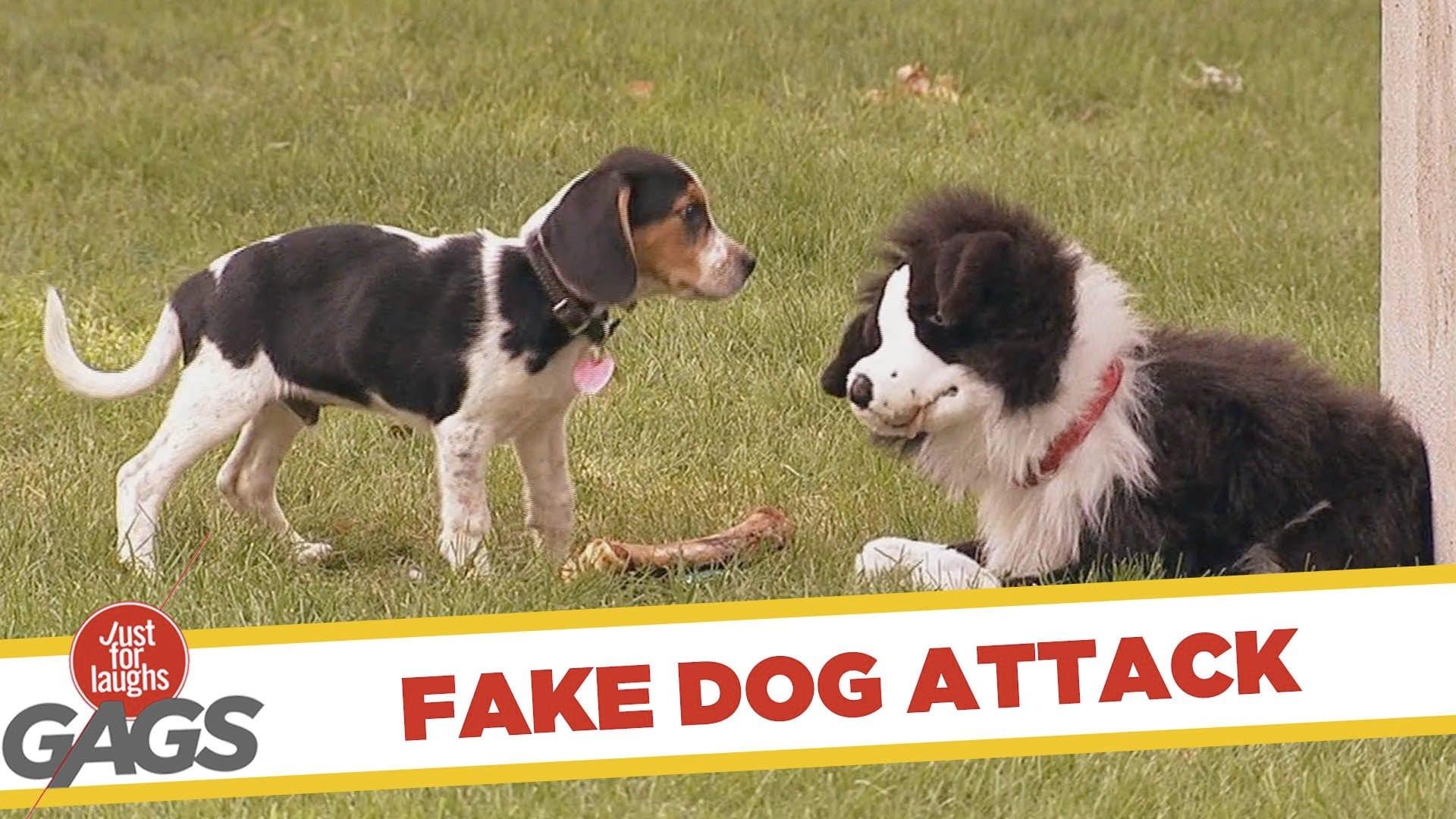 fake dog