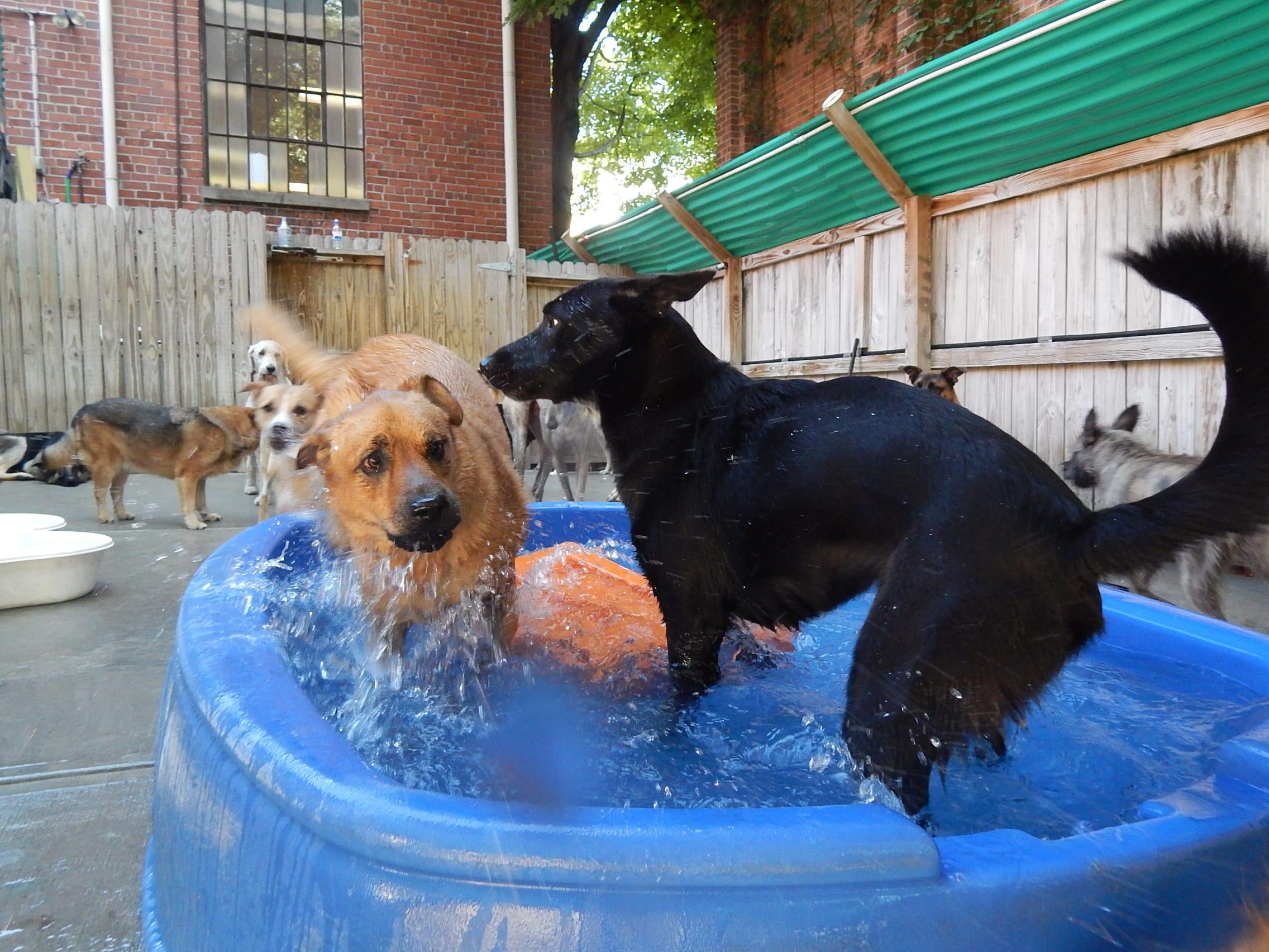 Pool Party at Bark ATL