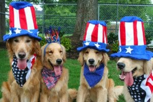 July 4th Tips to Prevent a Lost Dog