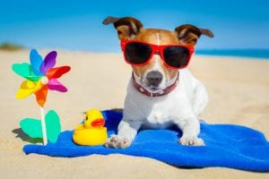 summer fun ideas with your dog.