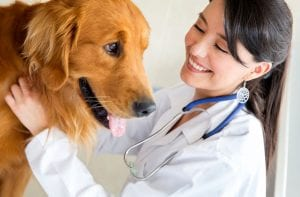 Finding Right Vet For Your Dog