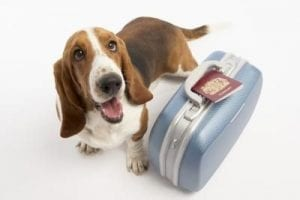 Traveling With Your Dog   Bark ATL
