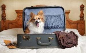Doggie Hotel | Bark ATL