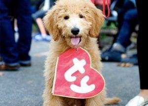 DIY Dog Costume   Bark ATL