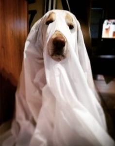 DIY Dog Costume Ideas   Bark ATL