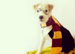 DIY Dog Costumes   Bark ATL