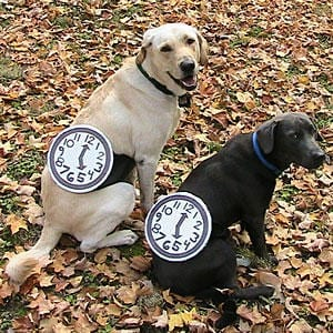 DIY Dog Halloween Costumes   Bark ATL