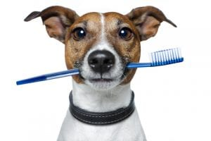 Pet Dental Health Month | Bark ATL