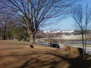 top 5 dog parks in atlanta