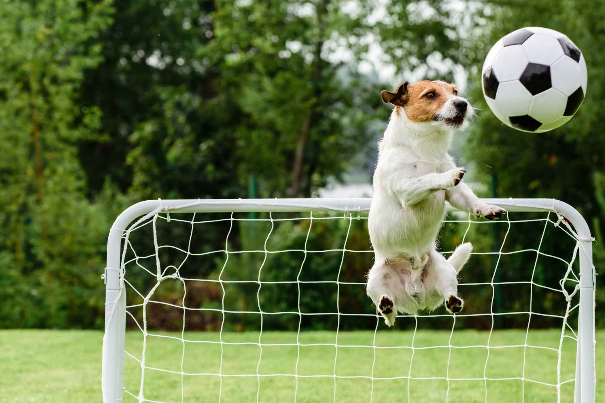 19 Happy dogs who are having the best day ever: Smiling dog  |Dog Play