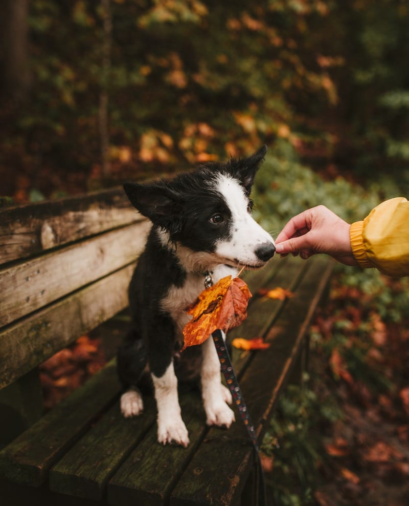 Fall Activity with You and Your Dog in the Park
