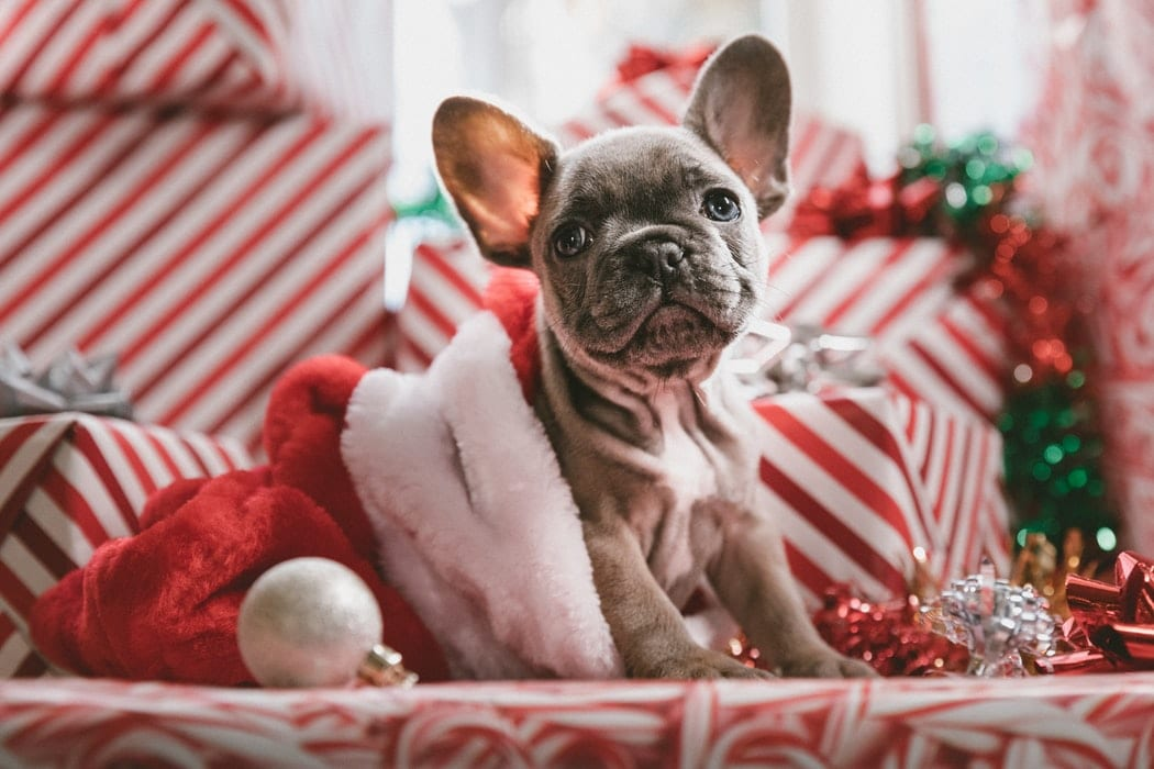 The Best Holiday Gift Ideas For Your Dog This Season